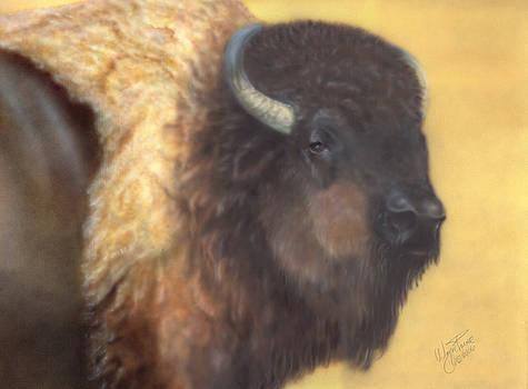 American Bison by Wayne Pruse
