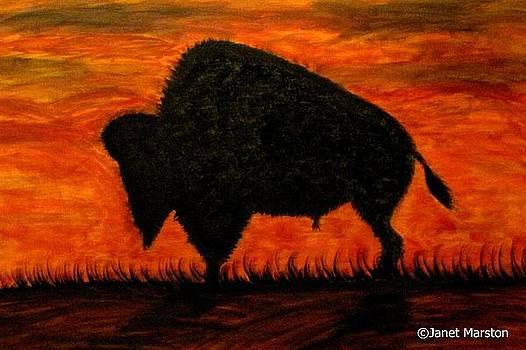 American Buffalo Silouette by Janet Marston