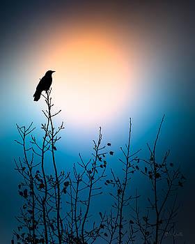 American Crow Sunrise by Bob Orsillo