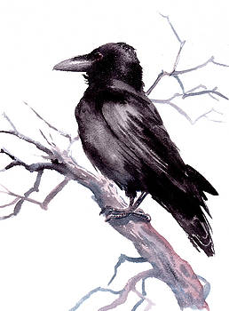 American Crow by Suren Nersisyan