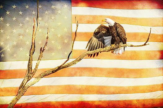 James BO Insogna - American Bald Eagle Salute