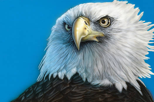 American Eagle by Wayne Pruse