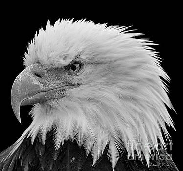 American Fierce by Diane E Berry