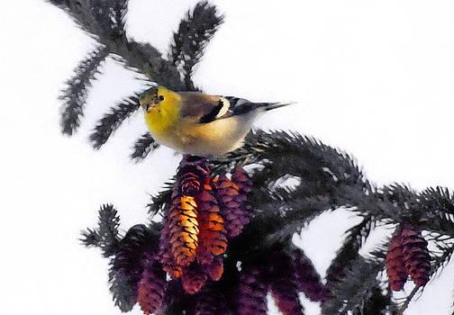 American Goldfinch by Andrea Kollo