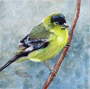 American Goldfinch by Bonnie Rinier