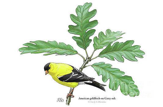 American goldfinch on Oak by Emily Damstra