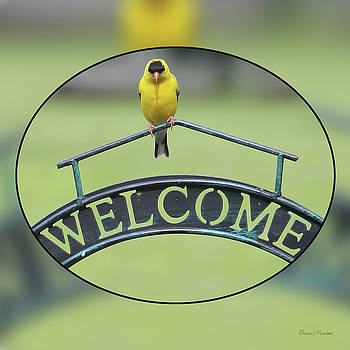 American Goldfinch Welcome by Ericamaxine Price