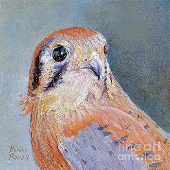 American Kestrel No. 2 by Bonnie Rinier