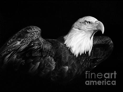 American Pride by Miro Gradinscak