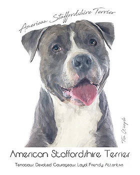 American Staffordshire Terrier Poster 2 by Tim Wemple