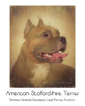 American Staffordshire Terrier Poster by Tim Wemple