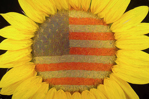 American Sunshine by James BO Insogna