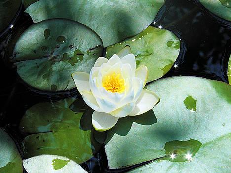 American Water Lilies by J Jaiam