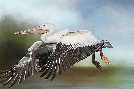 American White Pelican in Flight by Bonnie Barry