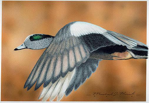 American Widgeon by Michael Kreizel