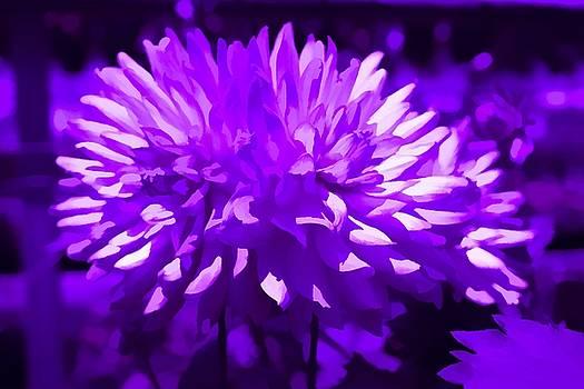 Amethist Flower by Debra Lynch