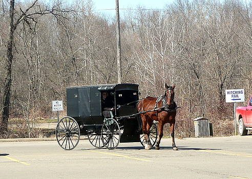 Amish Buggy by Barb Montanye Meseroll