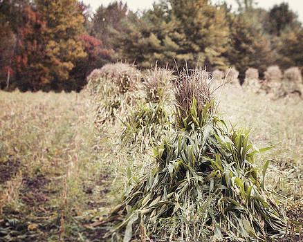 Lisa Russo - Amish Corn Shocks