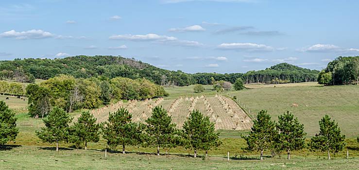 Amish Corn Stalks by Dan Traun
