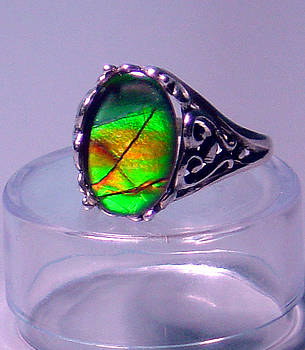 Ammolite and Sterling Filigree Ring by Robin Copper