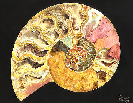 Ammonite Fossil by Lynn Quinn