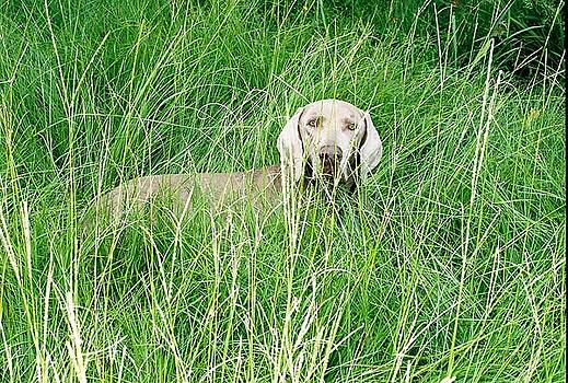 Cindy New - Among the grasses