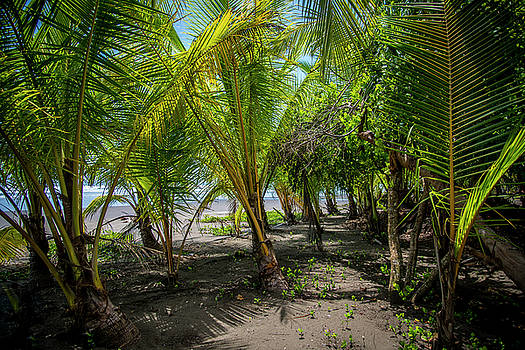 Among the Palms by David Morefield