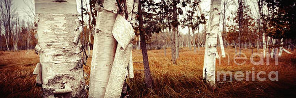Among The Tall Grass by RicharD Murphy