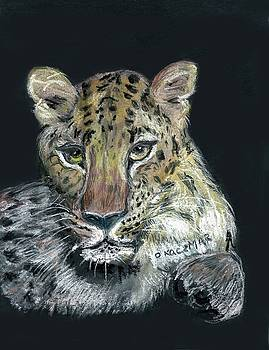 Olga Kaczmar - Amur Leopard