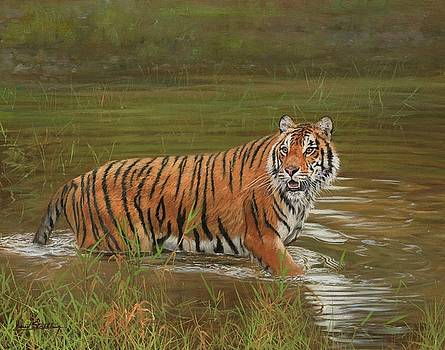 Amur Tiger Cooling Off by David Stribbling