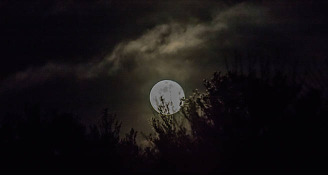 Amy Blue Moon by Brian MacLean