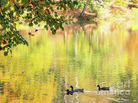An autumn swim by David Lane