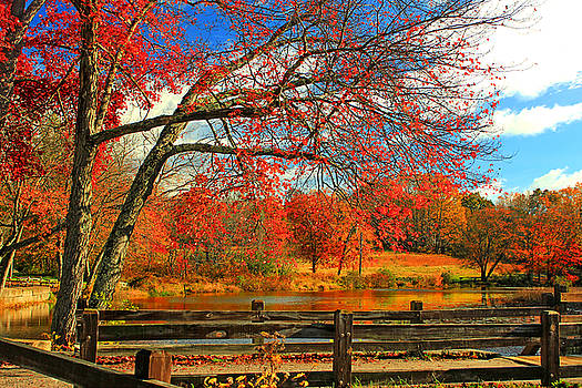 An Autumn View by Cathy Leite Photography