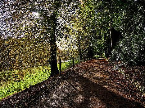 An Autumn Walk In Somerset by Susie Peek