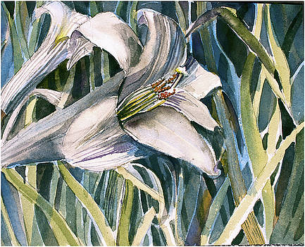 An Easter Lily by Mindy Newman