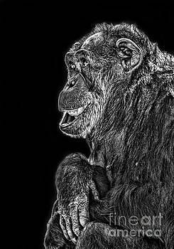 An Elderly Chimp Enjoying Life III by Jim Fitzpatrick