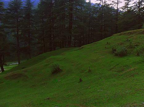 An evening in woods by Salman Ravish