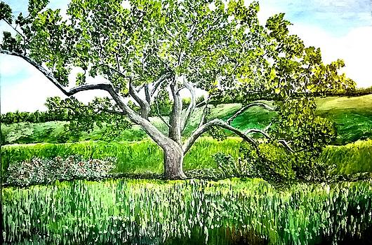An Oak Tree In Malibu State Park by Irving Starr