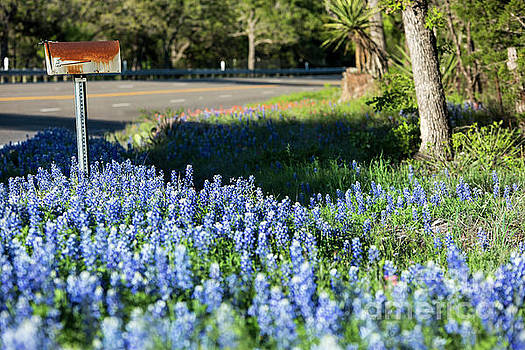 Herronstock Prints - An old rural mailbox is cover by bluebonnet wildflowers