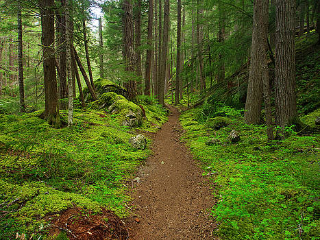 An Olympic Forest Trail by Robert Cross