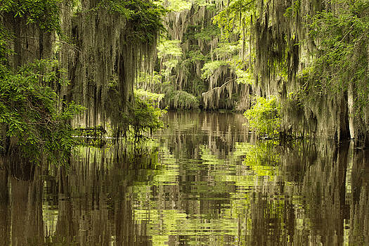 Ancient Cypress by Katherine Worley