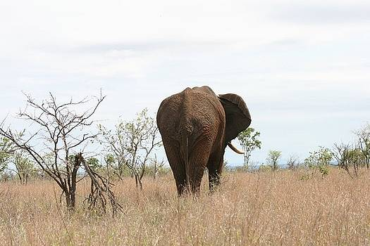 Ancient Elephant by Debbie Cundy