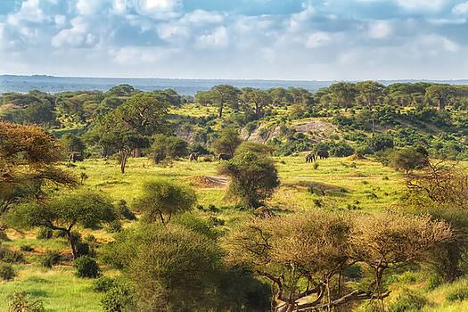 Sylvia J Zarco - Ancient Landscape