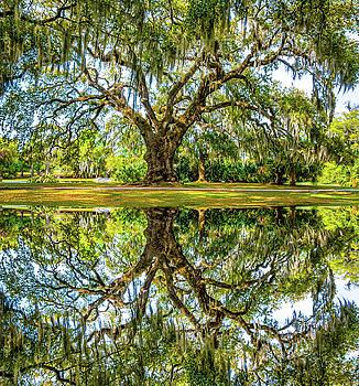 Steve Harrington - Ancient Live Oak - Reflection