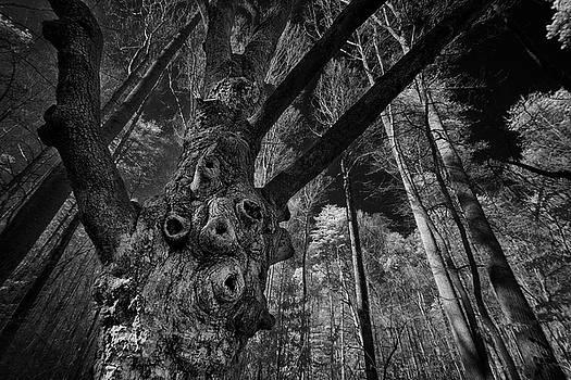 Ancient Tree by Mark Wagoner