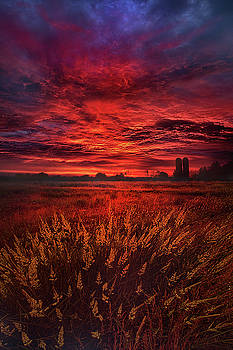 And So The Lion Fell In Love With The Lamb by Phil Koch
