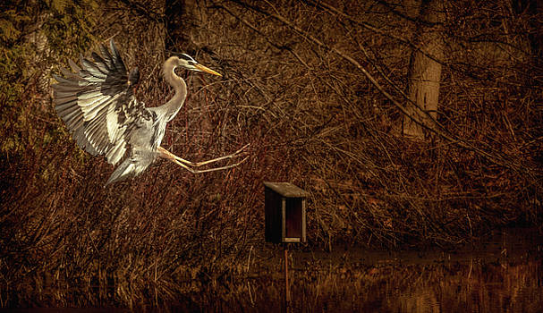 And then the Grand Heron appeared... by Yves Keroack