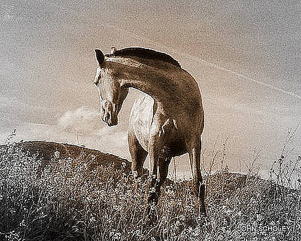 Andalucian Pony by John Scholey