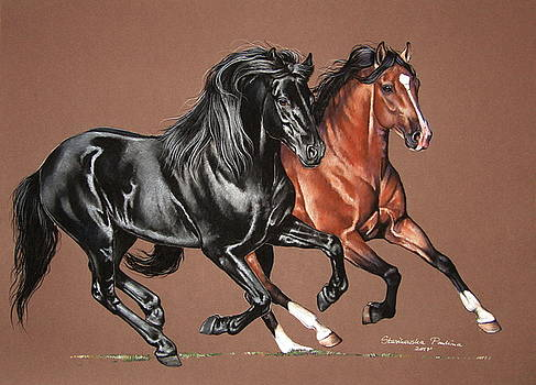Andalusian and fresian horse by Paulina Stasikowska