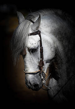 Andalusian  by Athena Mckinzie